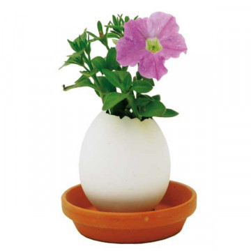 Eggling petunia